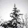 الثلوج في دمشق
