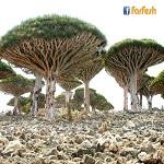 جزيرة سقطرى في اليمن .