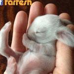 أرنب حديث الولادة غاية في الجمال