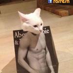 قطة تعرض أزياء