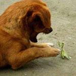لقطات جميلة بين هذا الكلب وفرس النبي ...