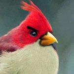 طائر اللعبة angre bird الحقيقي