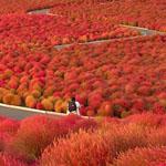 حديقة هيتاشي باليابان