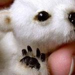 طفل الدب القطبي