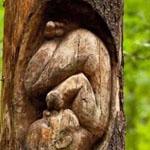 فن النحت على الأشجار !