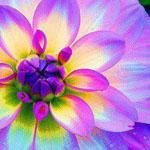 زهرة الأضاليا