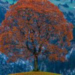 اطلالة ساحرة من جبال الألب في سويسرا . .