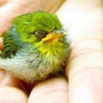 الطائر الصغير الغاضب و الجميل في نفس ...