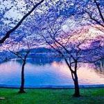 الغسق الأزرق_ شارلوتسفيل _ فرجينيا.