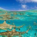 تحت الماء - بورا بورا !