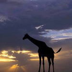 ما اجمل الغروب في براري أفريقيا