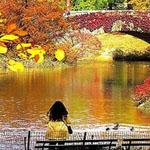 جلسة هادئة في حديقة سنترال بارك في نيويورك