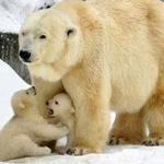 حماية الام لأطفالها اينما تكون