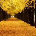 صورة رائعة من ألمانيا الطريق الذهبي