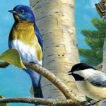 الوان الطيور الجذابة