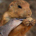 الرحمه بين الحيوانات وتقاسم الطعام فيما بينهم