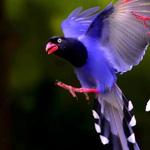 سبحان الله طائر جدا جميل سبحان الخالق