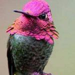 ما اجمله انه الطائر الطنان