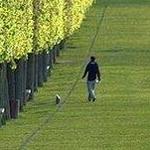 الاشجار فى باريس