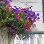 زراعة الورود في كل مكان