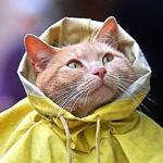 غطي راسك يا حلوة من المطر