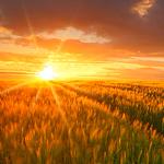 تشرق الشمس لتلقي تحية صباحية بنثر ضيا...