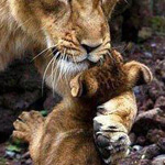 سبحان الله ما أجمل الأمومة
