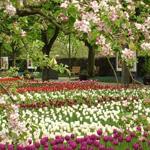منظر رائع من أحدى حدائق ألمانيا