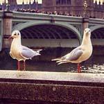 جمال لندن