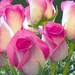 مساء الورد للحلوين