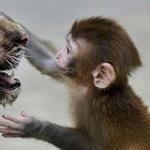 براءة الحيواناات