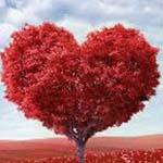 افرح يا قلبي لك نصيب تبليغ مناك ويا ا...