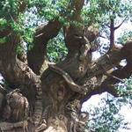 شجرة صناعية تعتبر رمز المملكة بولاية ...