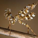 صورة رائعة لاثنين من حشرة فرس النبي ت...