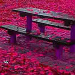 اللون الوردي يعبر عن الطفولة وشقاوتها...