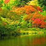 الغابات الخلابة