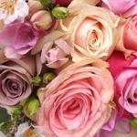 الورد للورد اصدقائي
