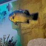 غرفة أطغال على شكل حوض سمك