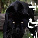لن تهزمني اي صدمات ليس لأني من حديد ولكن !!!