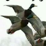 لا تسألوا الطيور لماذا غادرت اوطانها