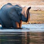 قافلة الفيلة ..روعة