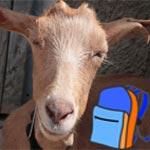 صدّق او لا تصدق: مدارس زيمبابوي تقبل الماعز كدفعة من الاهل بدل رسومٍ دراسية!