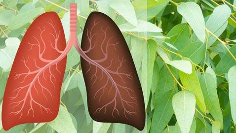 8 أعشاب تعزز من صحة الرئتين وتبعد سرطان الرئة والتهابها
