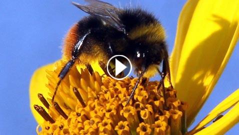 كيف سيكون عالمنا إذا اختفت الحشرات؟! فيديو