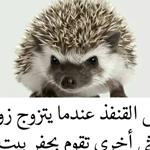 والله بيستاهل .. شو رأيكن
