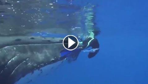 فيديو مذهل.. قرش يهاجم عالمة بحرية في المحيط وحوت ينقذها من الموت