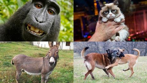10 أحكام قضائية غريبة ضد حيوانات:محاكمة ببغاء يتحرش بالسيدات وديك ملحد!