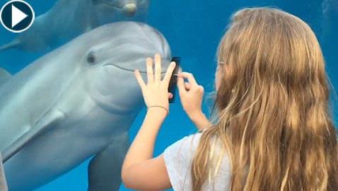كيف استطاعت طفلة جذب الدلافين؟