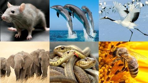 ظاهرة غريبة: حيوانات تتفوَّق على البشر وتتنبأ بأمور قبل وقوعها!