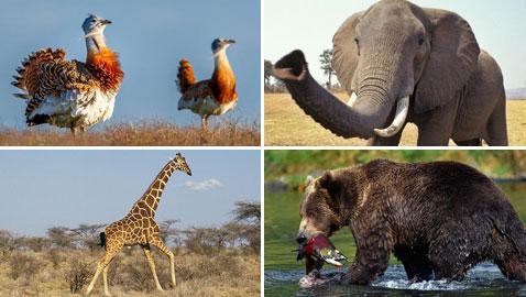 تعرفوا على حيوانات حطمت الأرقام القياسية بأحجامها